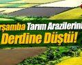 Çarşamba Tarım Arazileri Bölünüp Parçalanmasın Diye Toplandı