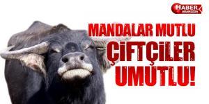 Manda Projesi Ankara'da 'Mandalar Mutlu Çiftçi Umutlu!'