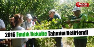Samsun'da 2016 Yılı Fındık Rekolte Tahmini Belirlendi
