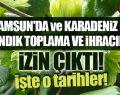 Samsun'da ve Karadeniz'de Fındık Toplamaya ve İhracına İzin Çıktı!