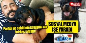 Kayıp köpek Pascal'ın sahibiyle buluşması herkesi ağlattı! Videolu