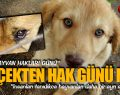 4 Ekim Dünya Hayvan Hakları Günü Gerçekten Hak Günü Mü?