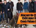 Alaçam'da Çiftçilere 1500 Adet Ücretsiz Ceviz Fidanı Dağıtıldı