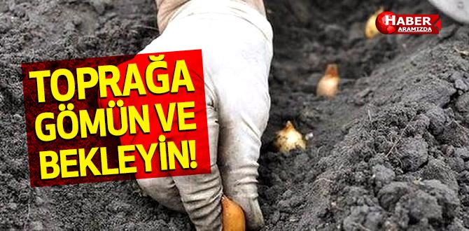 Toprağa Gömün ve Bekleyin Sonuca inanamayacaksınız!