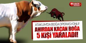 Samsun'da Kızgın Boğa Operasyonu!