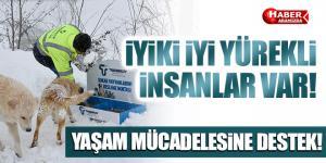 Tekkeköy Belediyesi sokak hayvanlarını unutmadı