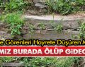 Samsun'da Görenleri Hayrete Düşüren Mahalle!
