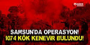 Samsun'da Kenevir Operasyonu!