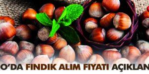 TMO FINDIK ALIMLARINA DEVAM EDİYOR