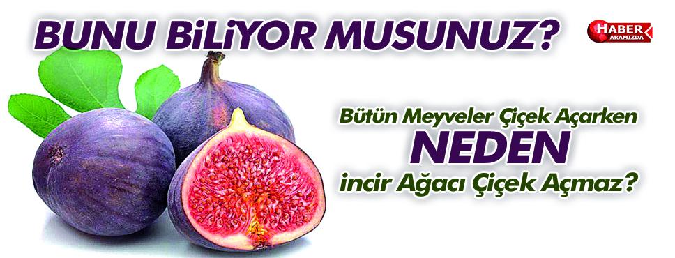 Bütün meyveler çiçek açarken, İncir ağacı neden çiçek açmaz?
