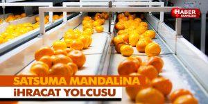 Satsuma mandalina ihracat yolcusu