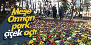 Meşe Orman park çiçek açtı