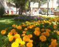 İlkadım Belediyesi, doğaya ve yeşile sahip çıkıyor