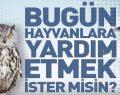 Samsun Büyükşehir Belediyesi Hayvanları Unutmadı