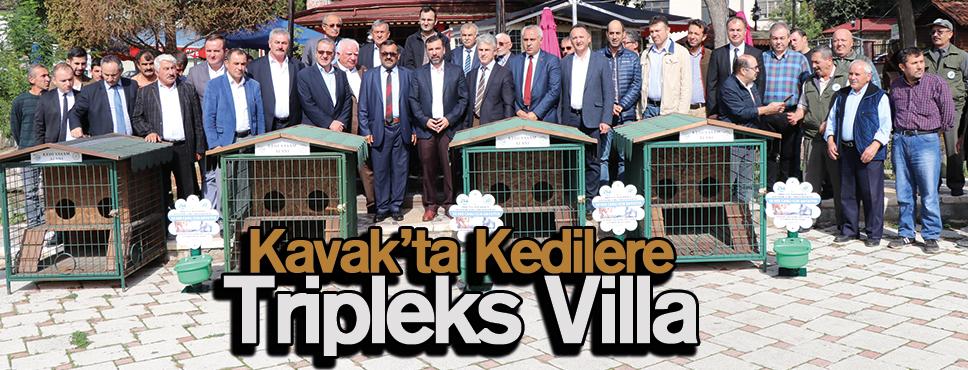 Kedilere Tripleks Villa