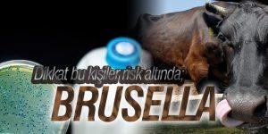 BU ÜRÜNLERİ TÜKETMEK BRUSELLA RİSKİNİ ARTIRIYOR