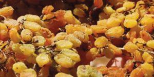 Çekirdeksiz kuru üzüm ihracatı rekor kırdı