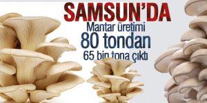 Samsun'da Mantar üretimi 80 tondan 65 bin tona çıktı