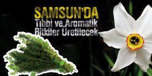 Samsun'da Tıbbi ve Aromatik Bitkiler Üretilecek