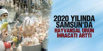 2020 YILINDA SAMSUN'DA HAYVANSAL ÜRÜN İHRACATI ARTTI