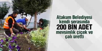 Atakum Belediyesi kendi serasında 200 bin adet mevsimlik çiçek ve çalı üretti