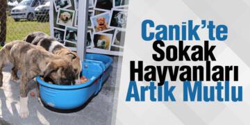 Canik'te Sokak Hayvanları Artık Mutlu