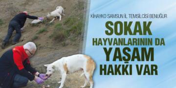 KİHAYKO Samsun'da Sokak Hayvanlarını Besliyor