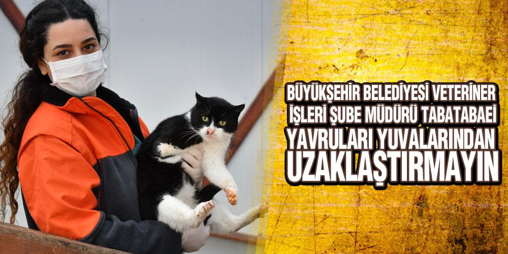 Samsun Büyükşehir'den Yavru Hayvan Uyarısı