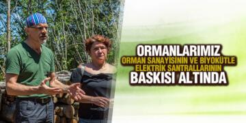 Samsun'un Akciğerleri Kocadağ'da Ağaç Kıyımına Son Verilsin!